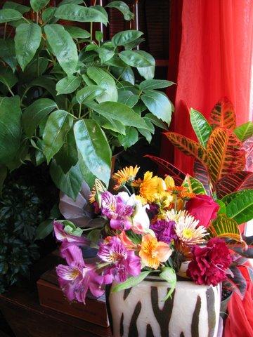 Plant and Zebra Flower Arrang