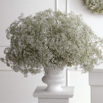 Baby's Brreath Arrangement in White Vase