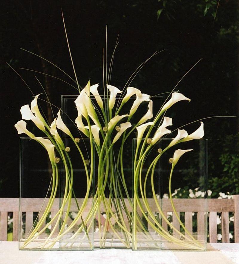Tall Calla Lilies Ovando
