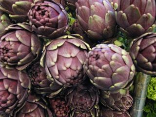 Purple artichoke