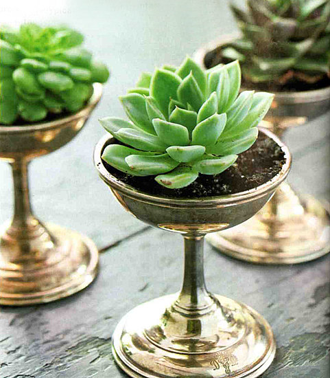 Jade plant in silver goblet