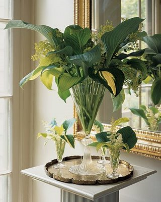 Green martha_stewart_green_and_white_foliage_hosta_Mair_Faiden