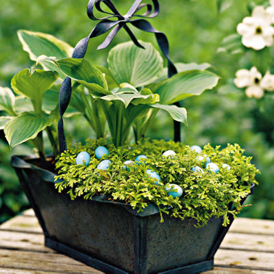 Easter Basket moss-hosta-Living Beauty and Comfort