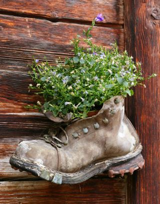 Garden in a boot - The daily green