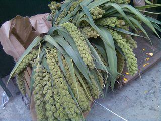 Flower District Green Amaranthus
