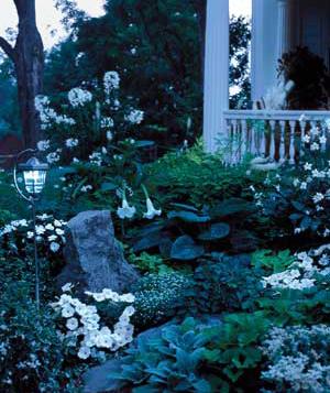 Moon Garden Evening