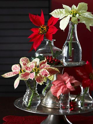 Poinsetias Done Right 2