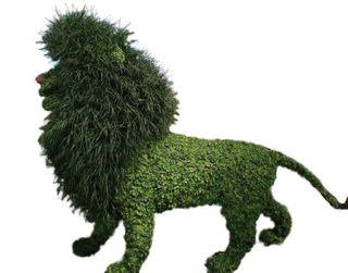 Grn lion