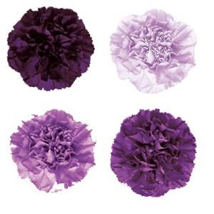 Purple flowers K