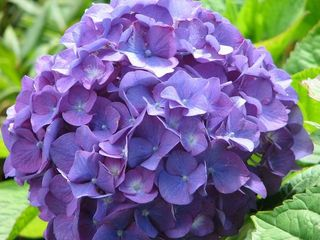 Purple flowers L