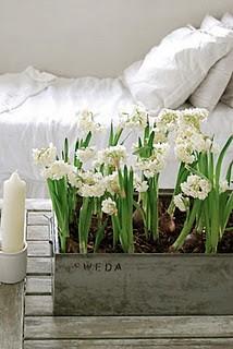 Bedroom flowers 1