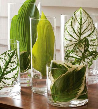 Green leaves in vases