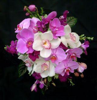 Pink Bouquet 11