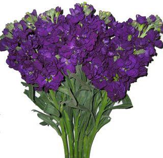 Purple flower J
