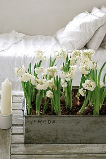 Flowers By Bed