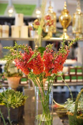 Orange Snaps flowers A - Z