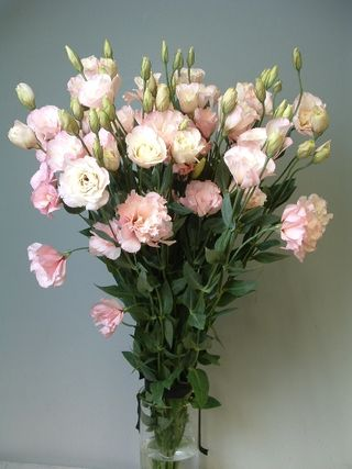 Lisanthus pink B