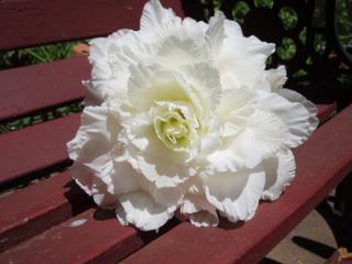 Top 5 Jan Bouquet B