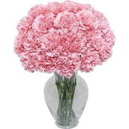 Pink carn in vase
