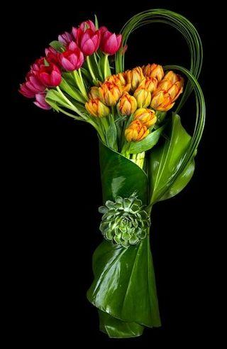 Tulip ovando