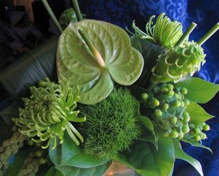 Green anthurium arrange