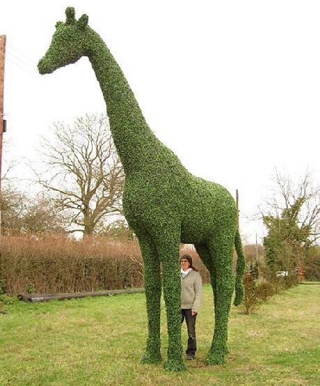 Grn giraffe