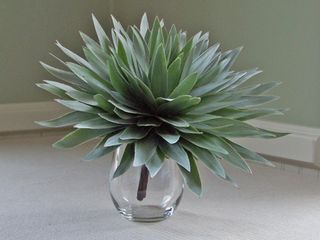 Glamelia silver tree