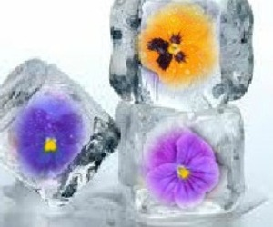 Floral ice cubes B