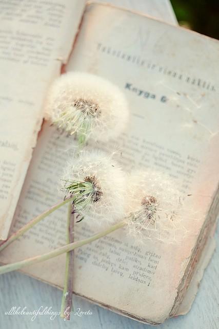 Dandelion book
