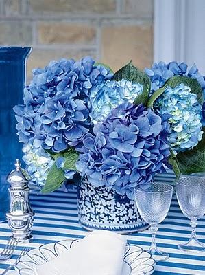 Blue hydrangea CR