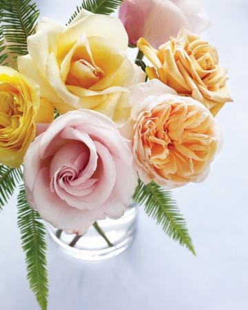 Garden Rose YYY