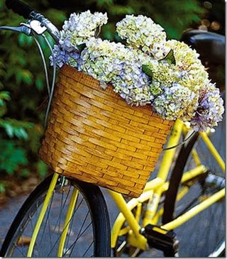 Flower bike CC