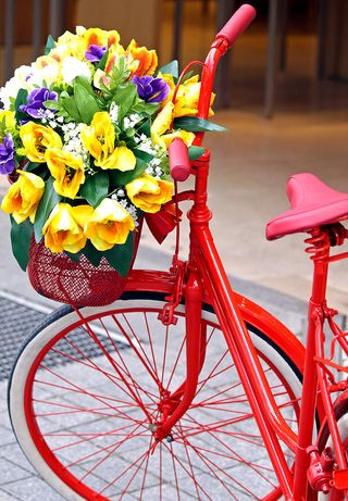 Flower bike EE