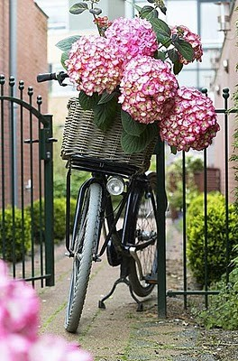 Flower Bike BB