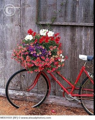 Flower bike FF