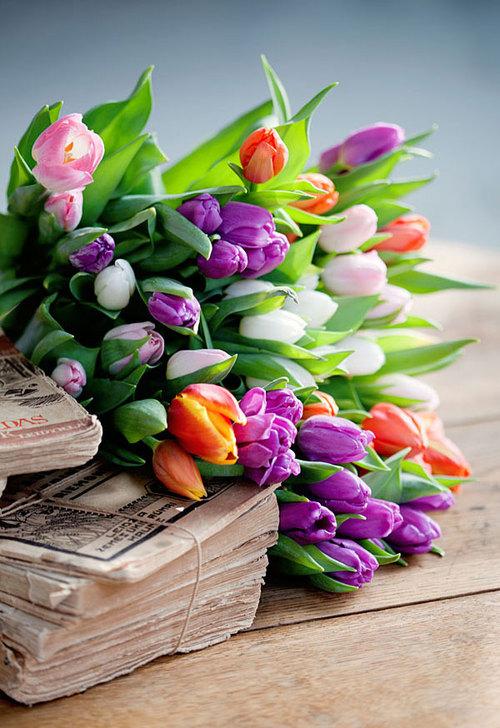 Tulip vignette