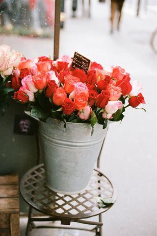 Orange and pink rose dust jacket