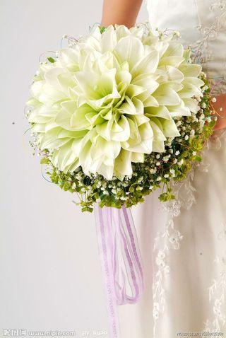 White Lily Glamelia