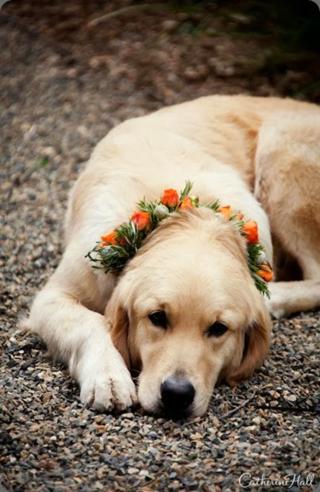 Dog flower A