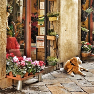Dog Flowers shop A