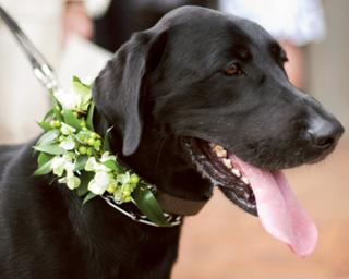 Dog Flower 2