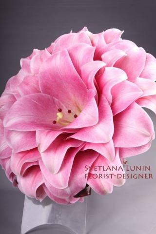 Pink glamelia 2