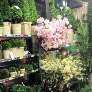 Jamali foliage and pink flowers