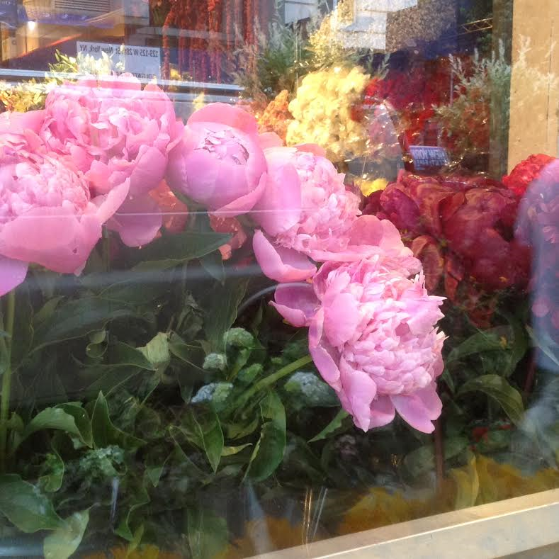 Peony Mixed Colors - Fly Me To The Moon Florists