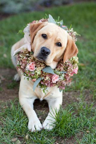 Dog Flower 6