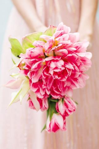 Pink glamelia 4