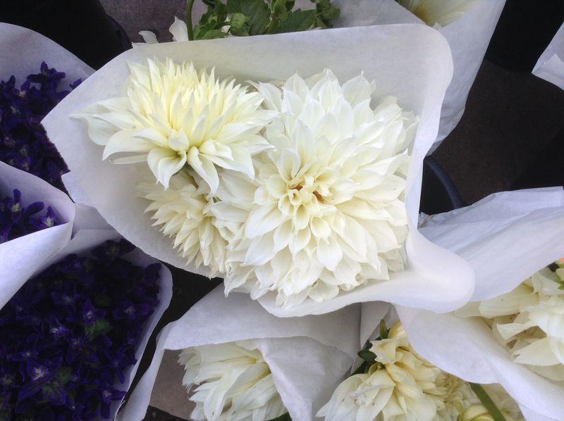 White dahlia fm