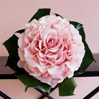 Pink glamelia 8