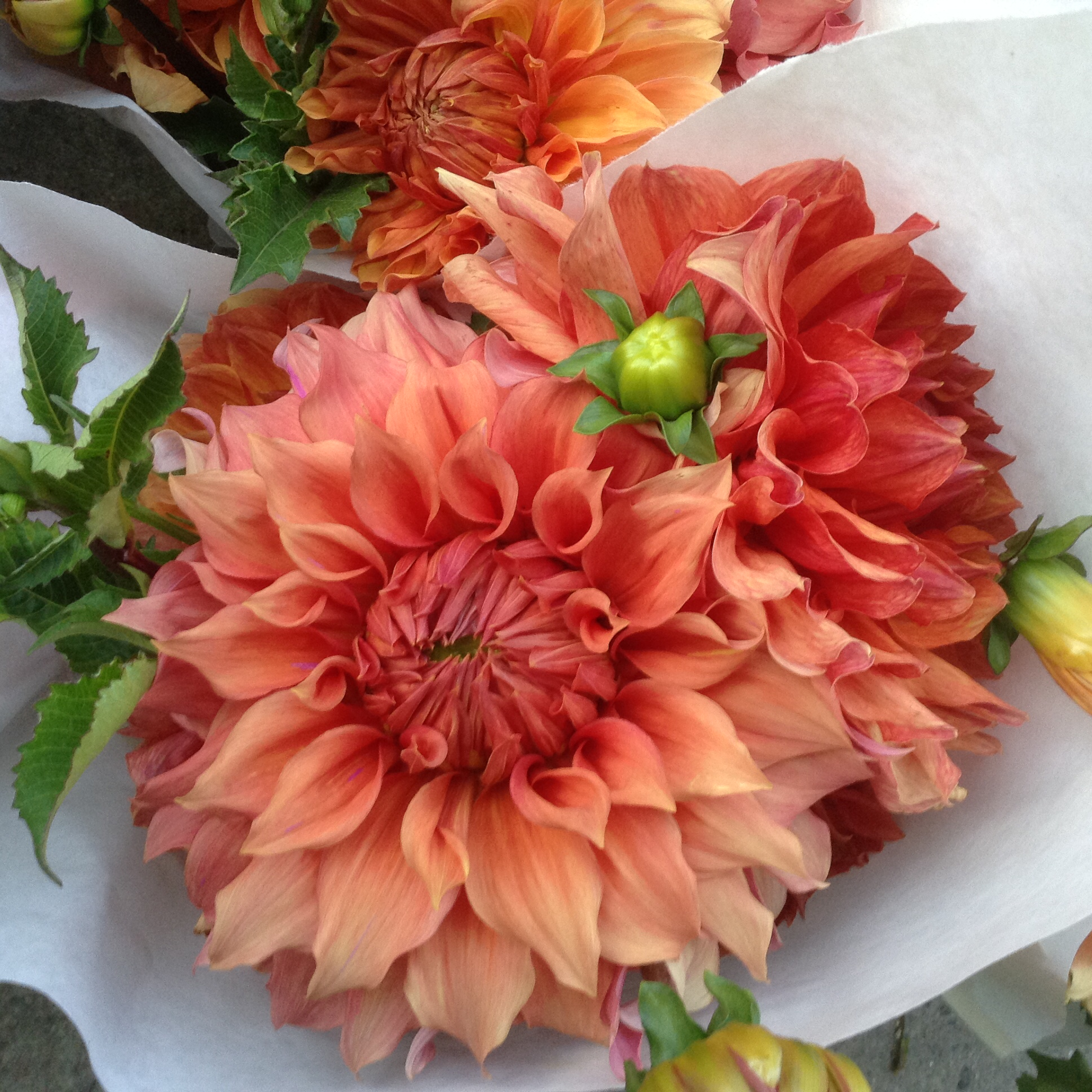 First come flowers flowers coral dahlia fm dhlflorist Gallery